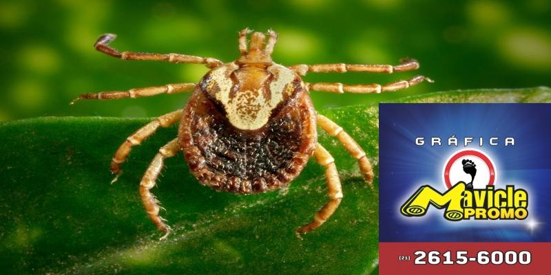 Febre maculosa: aumenta o número de casos suspeitos, o número de
